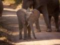 Слоненок и палочка