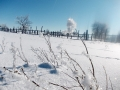 06 Снежные цветы