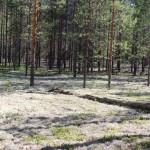 Леса Кемъяра