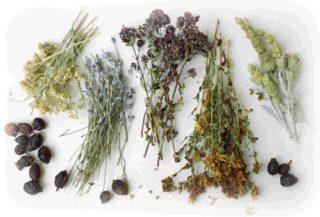 ПВД. Травы Черноземья. Чайные сборы